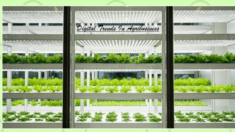 Urban farms one of the trends in Agribusiness
